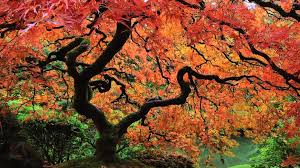 Japanese Garden Autumn At The Portland Japanese Garden An Hdserenescapes