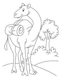 Small Picture Camel is sitting in the desert coloring page Download Free Camel