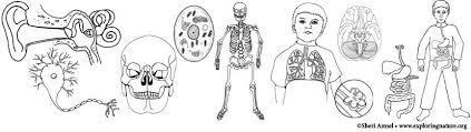 Anatomy Human Body Coloring