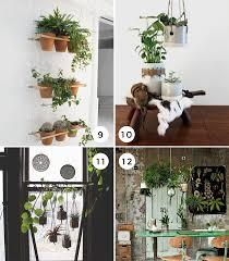 12 Unique Hanging Plants