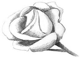 simple drawing in pencil. Wonderful Pencil How To Draw Rose With Simple Drawing In Pencil D