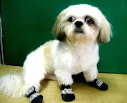 Dog Booties Pattern Interesting Design Inspiration