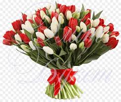 flower bouquet tulip red white tulip