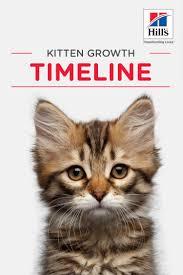 Kitten Growth Chart Weekly Kitten Development Timeline Kitten Growth Chart