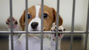 animal shelter pictures.  Pictures Animal Shelter May Still Need More Newspapers To Pictures T