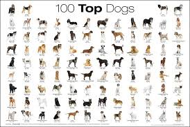 100 Top Dogs Dog Breeds Chart Dog Breeds List All Breeds
