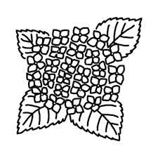アジサイ紫陽花3夏梅雨の花無料白黒イラスト素材 梅雨の白黒