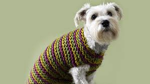 Free Knitted Dog Sweater Patterns Magnificent Top 48 Free Dog Sweater Knitting Patterns LoveKnitting Blog