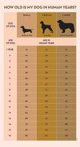 Dog To Human Years Chart Your Dogs Age In Human Years A Conversion Chart Dogs