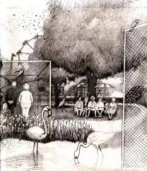 zoo drawing. Fine Zoo Zoo Drawing  By Andy Mercer To