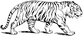 Free printable tiger coloring pages and download free tiger coloring pages along with coloring pages for other activities and coloring sheets. Tiger Coloring Pages Free Coloring Home
