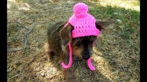 Crochet Dog Hat Pattern