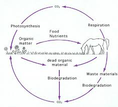 bacteria and archaea and the cycles of elements in the environment
