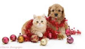 Christmas Cat Desktop Kitten Wallpaper, Cats image cats 36711832 ...