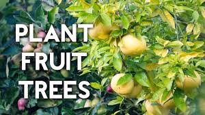 How To Grow An Apple Tree From Seeds  Growing Apples Fruits How Often Should I Water My Fruit Trees