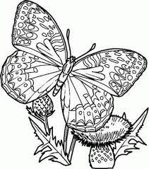 Kleurplaat Vlinder A4 Formaat