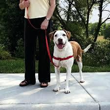 dog harness vest for pitbulls easy walk in action dog harness vest