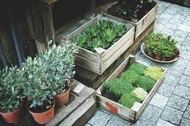 how to start a kitchen garden