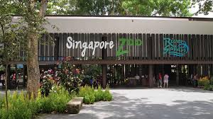 singapore zoo and then the rain came