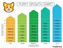 Airedale Weight Chart Puppy Development Growth Chart A Complete Guide For 2019