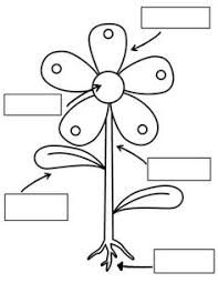 2d42774e9b9cc2e469a6b60dd98b7706 kasvin osat paste parts of plants worksheets click here parts_of_a_plant pdf to on structure of flower worksheet