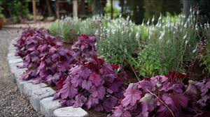 <b>Planting</b> a <b>New</b> Flowerbed // <b>Garden</b> Answer - YouTube