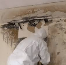 mold mitigation cost.  Mitigation National Average For Mold Mitigation Cost