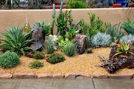 planting succulents in an outdoor garden