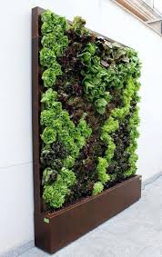 vertical wall garden bunnings lettuce and edible love it man i want one of vegetable gardens