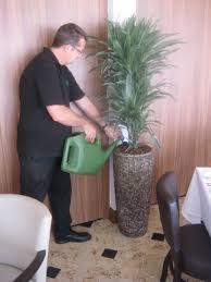 office plant displays. Our All-inclusive Routine Maintenance Servicing Ensures You Reap The Benefits Of Plants In Your Office And Includes: Plant Displays S