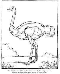 Small Picture Ostrich coloring pages Zoo animals