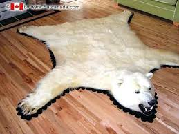 real bear skin rug polar white with head