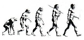 Ape Evolution Chart Human Evolution Chart Human Evolution Chart In 2019
