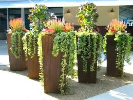 potted trees for outdoors potted trees for patio large size of patios for shade in pots