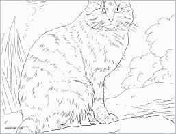 Coloring Pages Of Dogs And Cats 8457 For Cat Dog To Print Wumingme