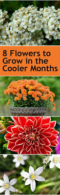Small Picture Best 25 Fall flower gardens ideas only on Pinterest Bulb
