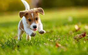 Wellness Core Puppy Feeding Chart Core Dry Formula Puppy Turkey With Chicken Wellness