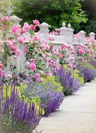 Small Picture 54 best Perennial flowers images on Pinterest Landscaping