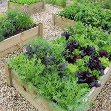healthy vegetable plants in a raised bed