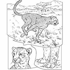 Small Picture 25 Best Cheetah Coloring Pages For Your Little Ones