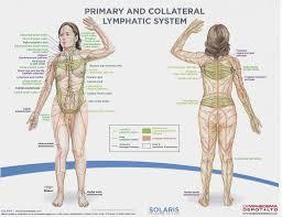 Diagram Of The Lymph Nodes Lymph Nodes In Body Diagram Human