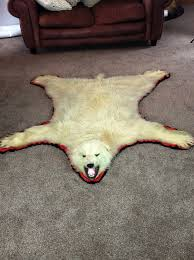 fake polar bear rug with head
