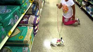 petsmart animals bunny. Fine Petsmart With Petsmart Animals Bunny A
