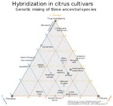 Citrus Wikipedia