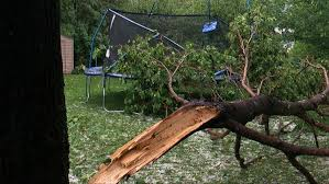 Good Question: Who Pays When A Neighbor\u0027s Tree Falls In Your Yard ...