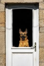 best automatic dog doors