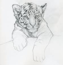 white tiger cubs drawing. Contemporary Drawing White Tiger Cub Request WIP By LittleIggyDog  And Cubs Drawing T