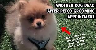 Petco Dog Collar Size Chart Dog Dead After Grooming Service At California Petco Peta