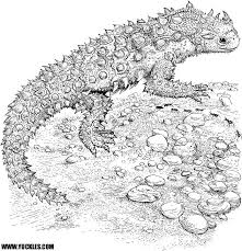 Small Picture Horned Lizard Coloring Page by YUCKLES