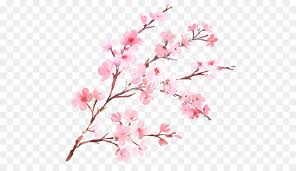 cherry blossom flower branch watercolor painting cherry blossom